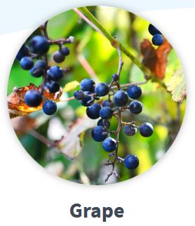 grape image