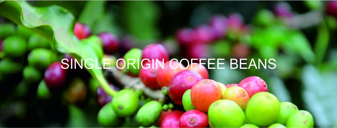 Zralé kávové třešně na kávovníku