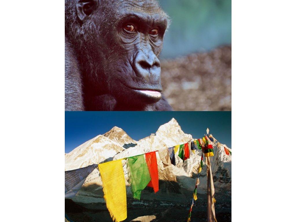 Uganda Nepál