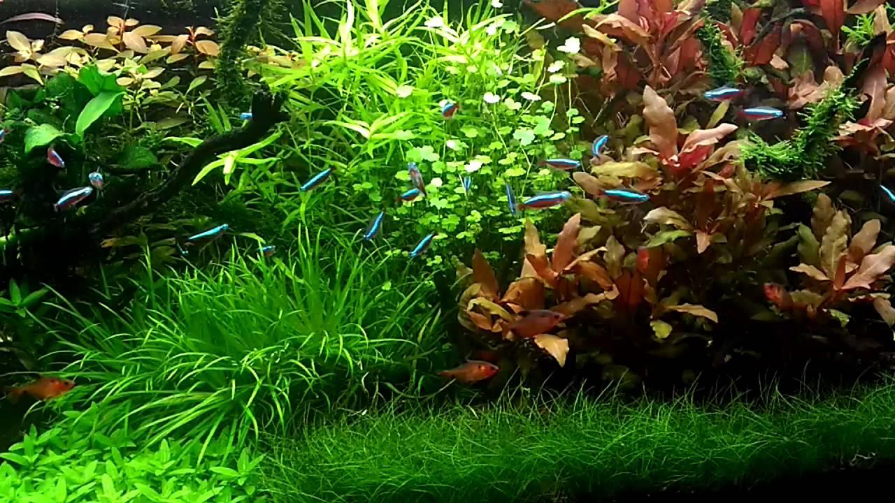 Rastliny v akváriu a živiny