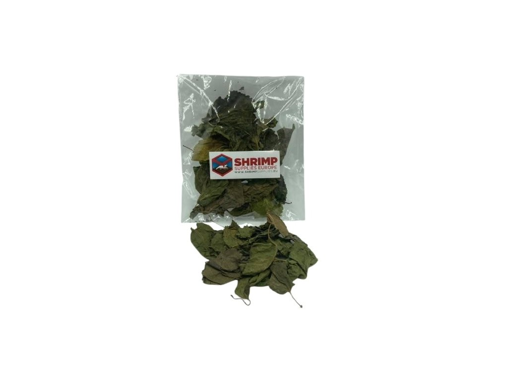shrimp supplies mulberry leaves