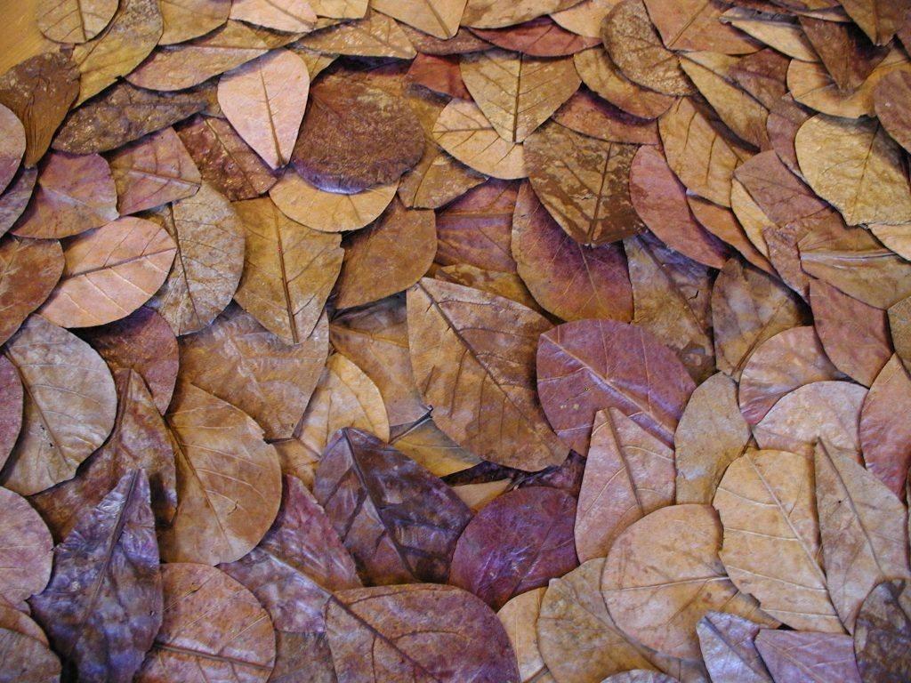 onlineaquarium spullen catappa leaves 12 18cm