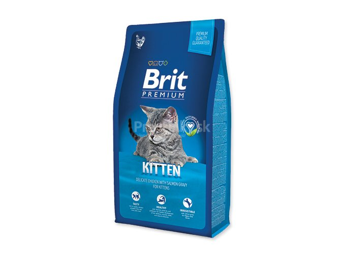 brit cat kitten