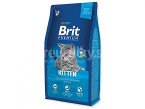 brit cat kitten