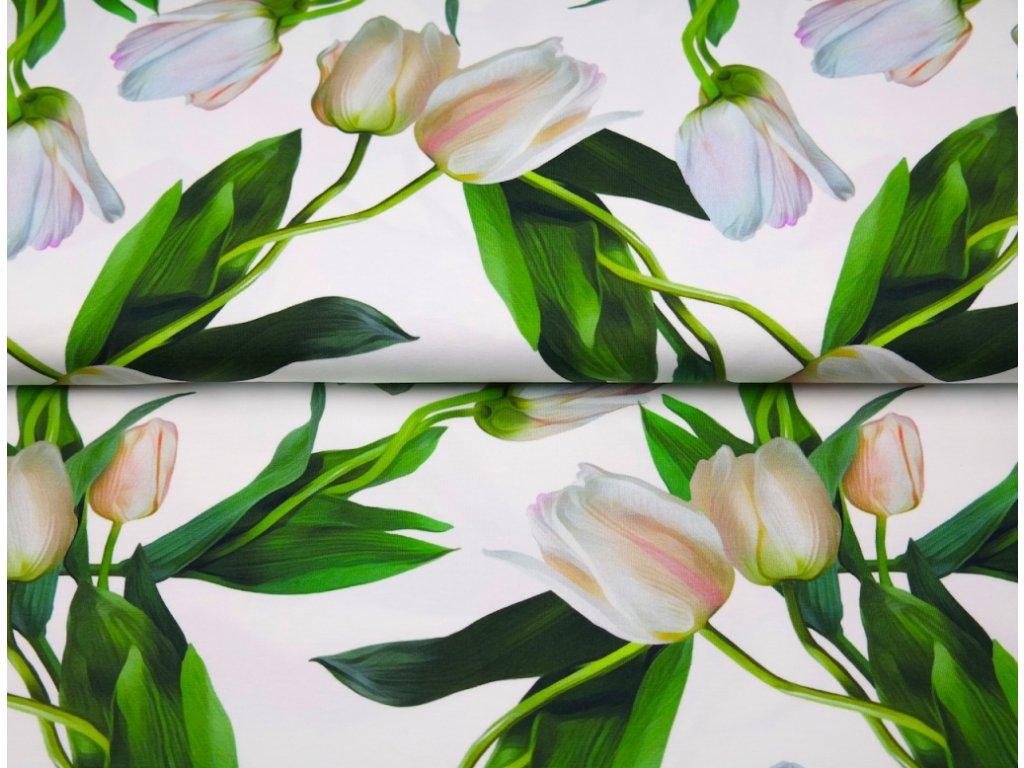 Bavlněný úplet s dig.tiskem, šíře 150 až 160 cm, tiskem Tulipány - bílý podklad