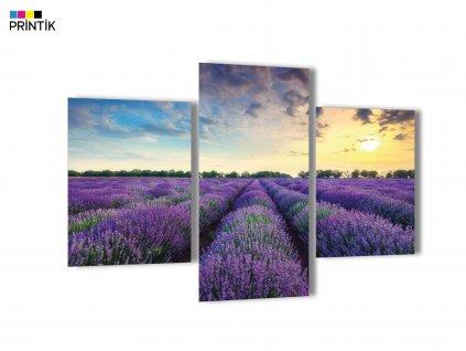 Obraz - Levandulové pole a západ slunce