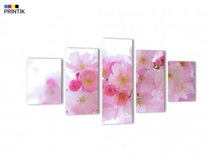 Obraz - Třešňové květy