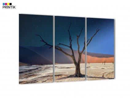 Obraz - Namibie Akácie