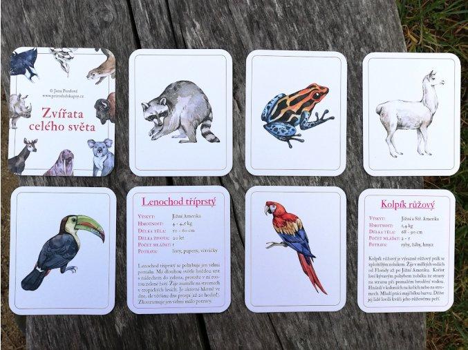 karty zvířata světa montessori 0
