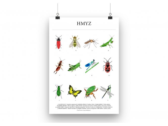Hmyz plakat mockup