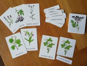 Třísložkové karty léčivé rostliny