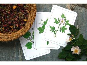 Karty Léčivé rostliny