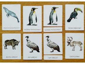 Třísložkové karty zvířata celého světa