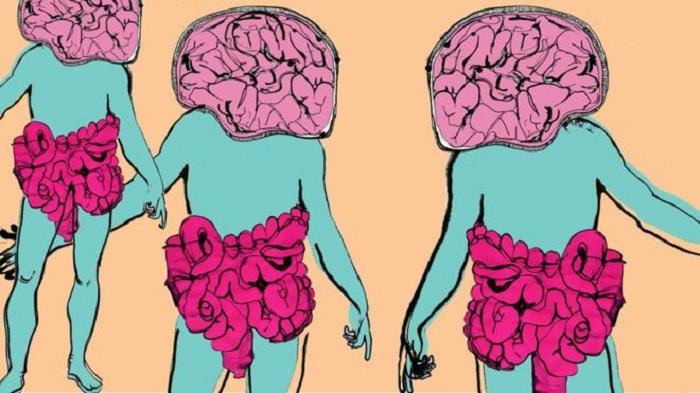 vliv střevních bakterií na naše chování