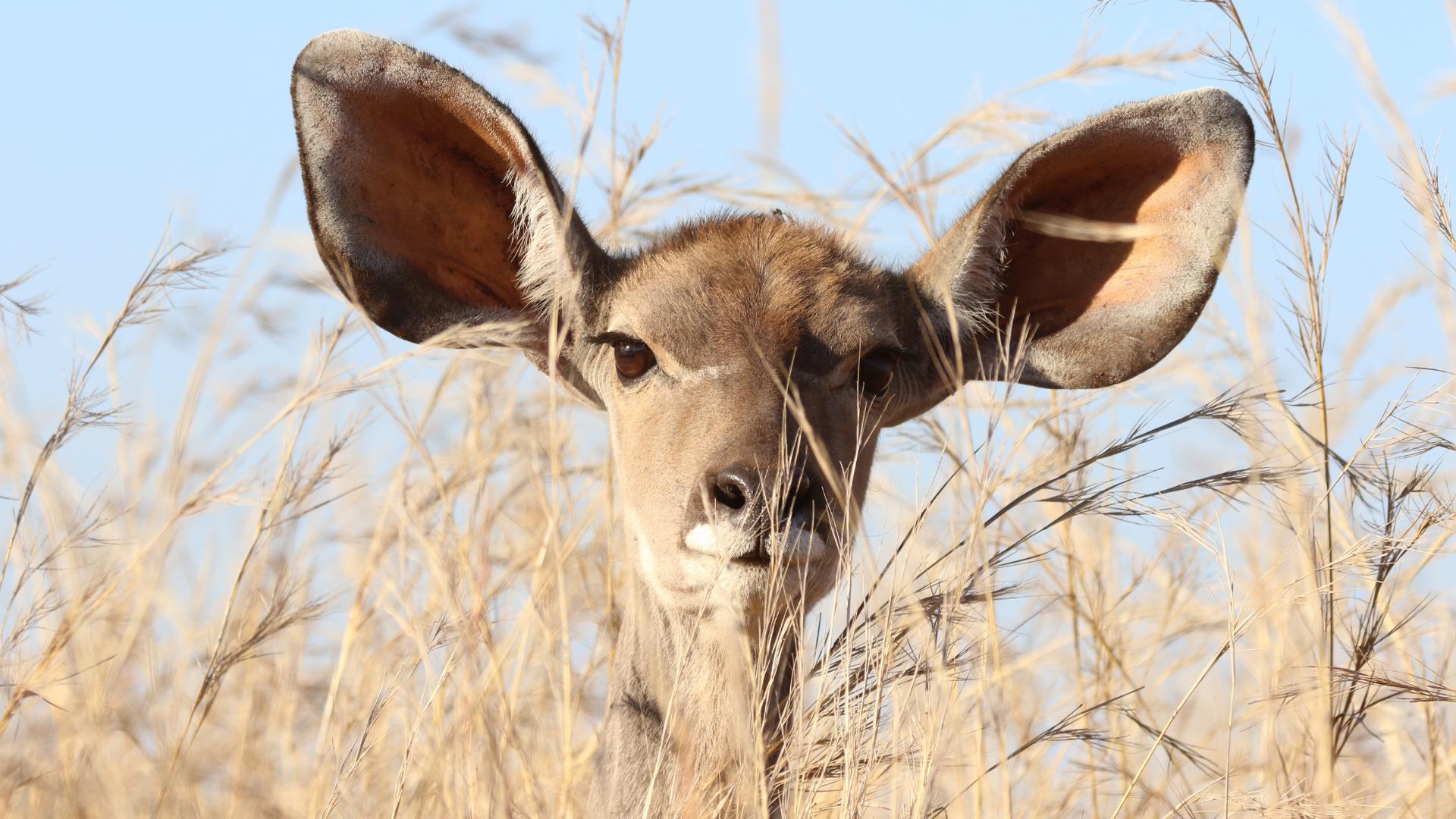tinitus a jiné potíže ucha
