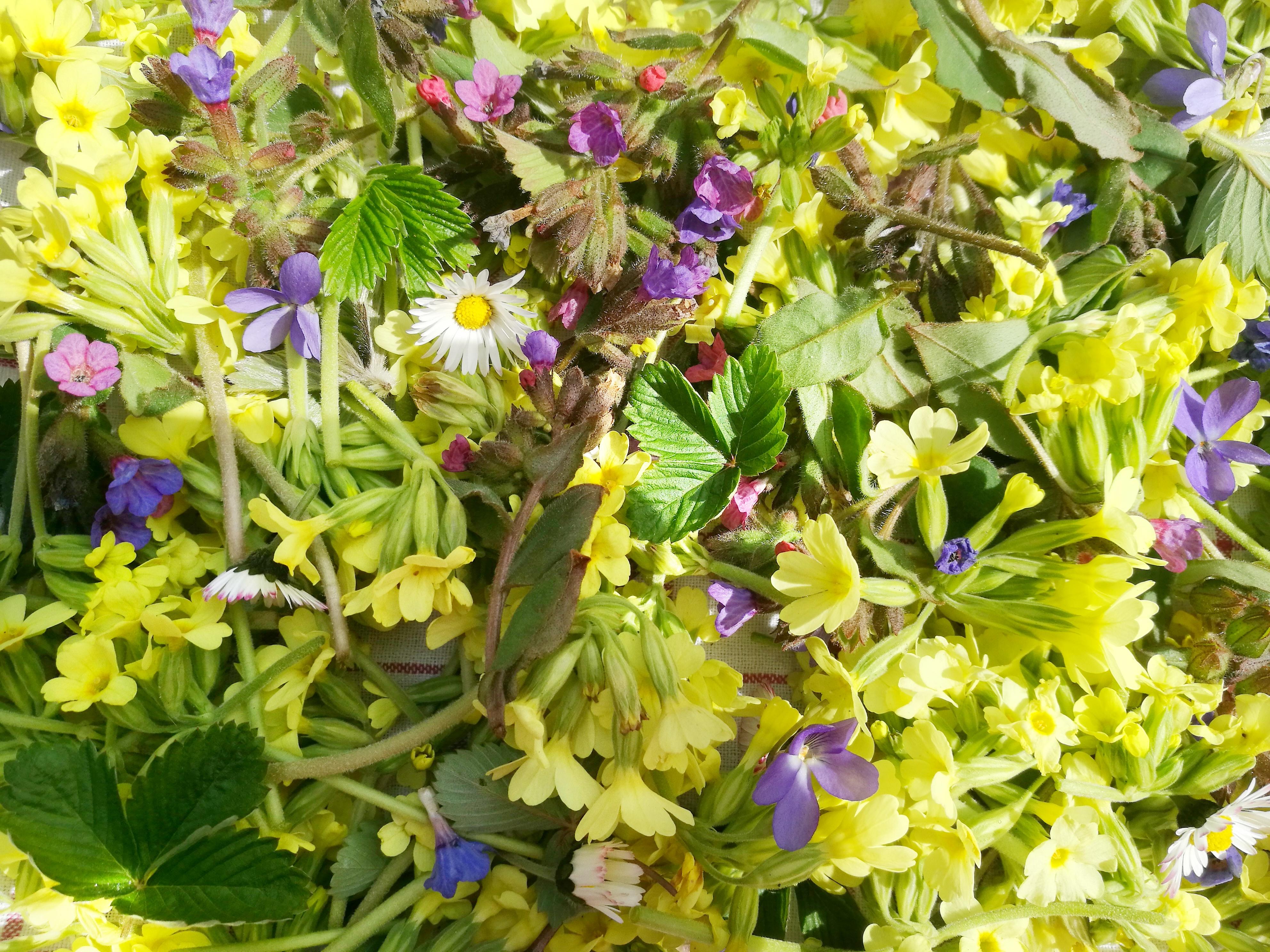 Jarní bylinky nejen na čaj, plus dárek ke stažení