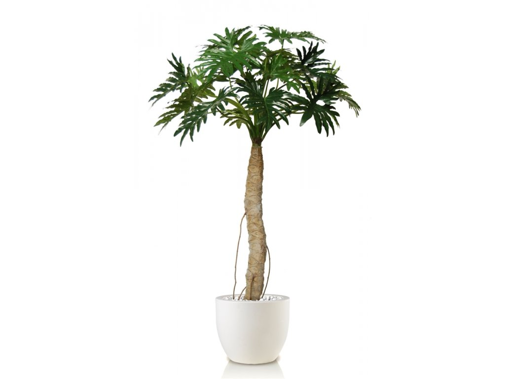 Philodendron Selloum 200 cm Green 5410GRN