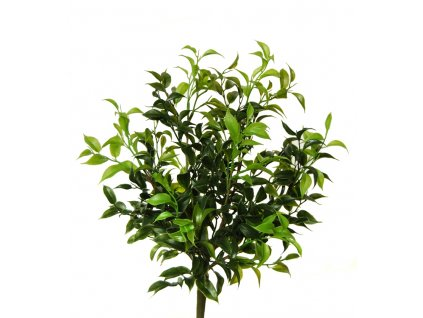 Ficus Mini 35 cm Green 5301GRN