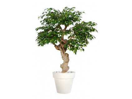 812(3) umely strom ficus golden crown 150cm
