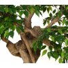 812 umely strom ficus golden crown 150cm