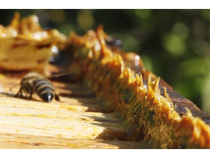 propolis včelky