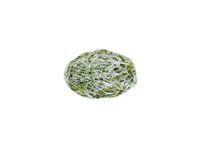 hořcice semínka na klíčení