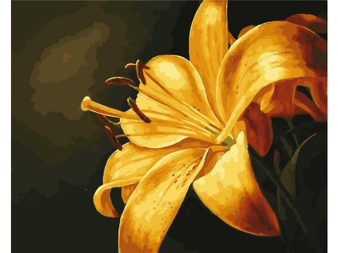 Žlutá lilie