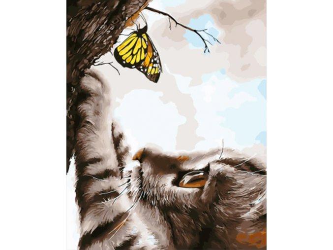 Kotě a motýl