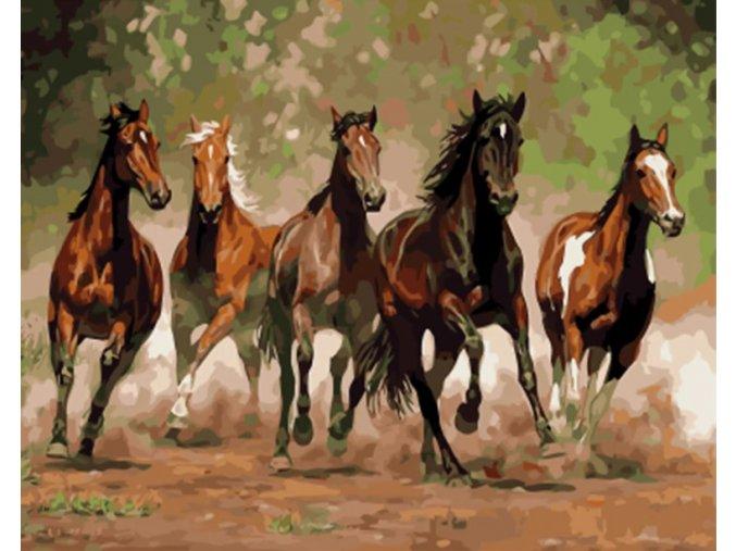 Koně v běhu