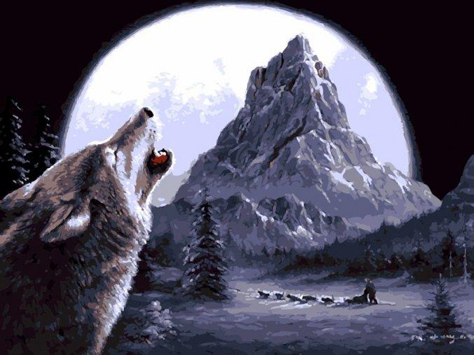 Vyjící vlk