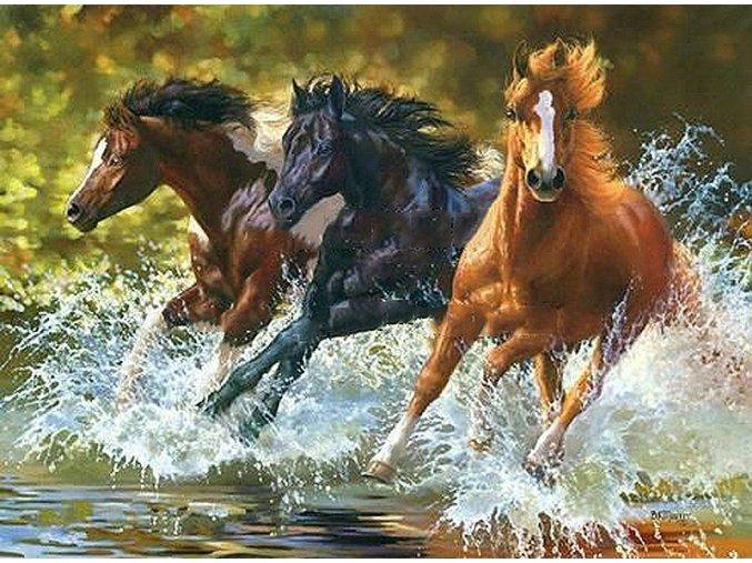 Koně ve vodě