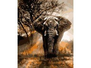 Běžící slon
