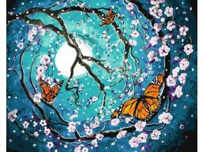 Půlnoční motýli