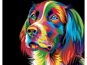 Abstraktní pes