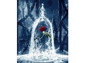 Ledová růže