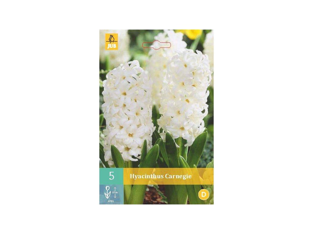 hyacint Carnegie