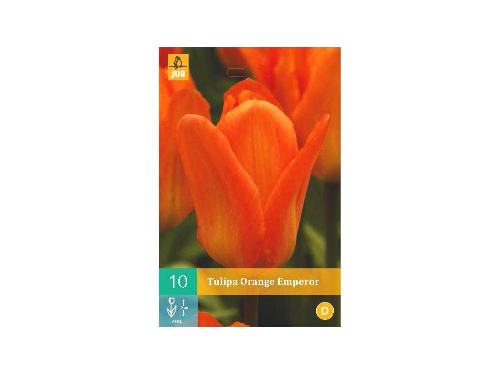 tulipán Orange emperor