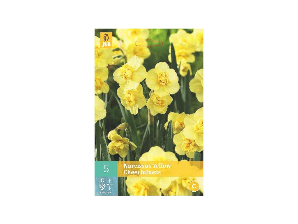 narcis yellow cheerfulness