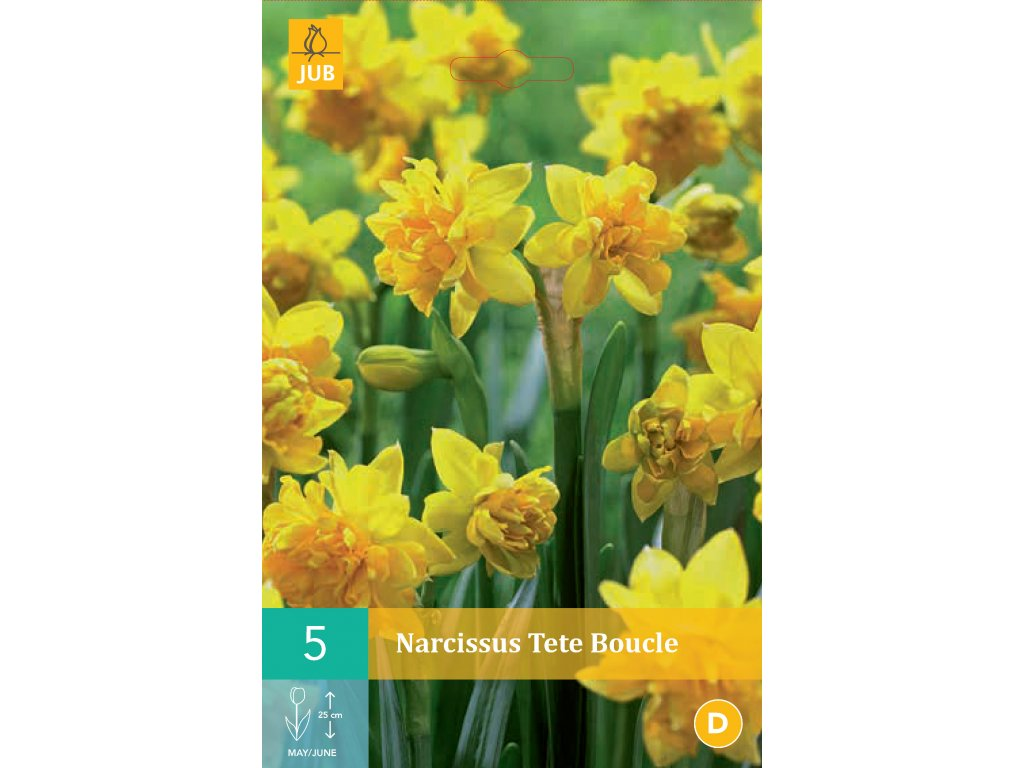 narcis tete boucle