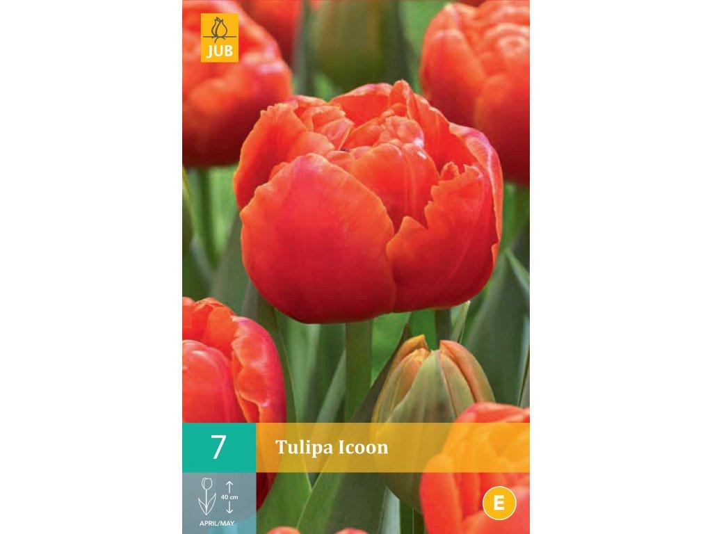 tulipán icoon