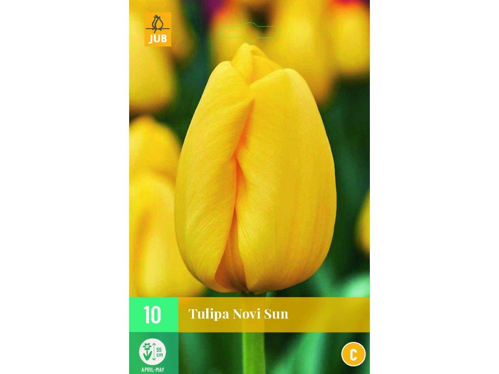 tulipán novi sun