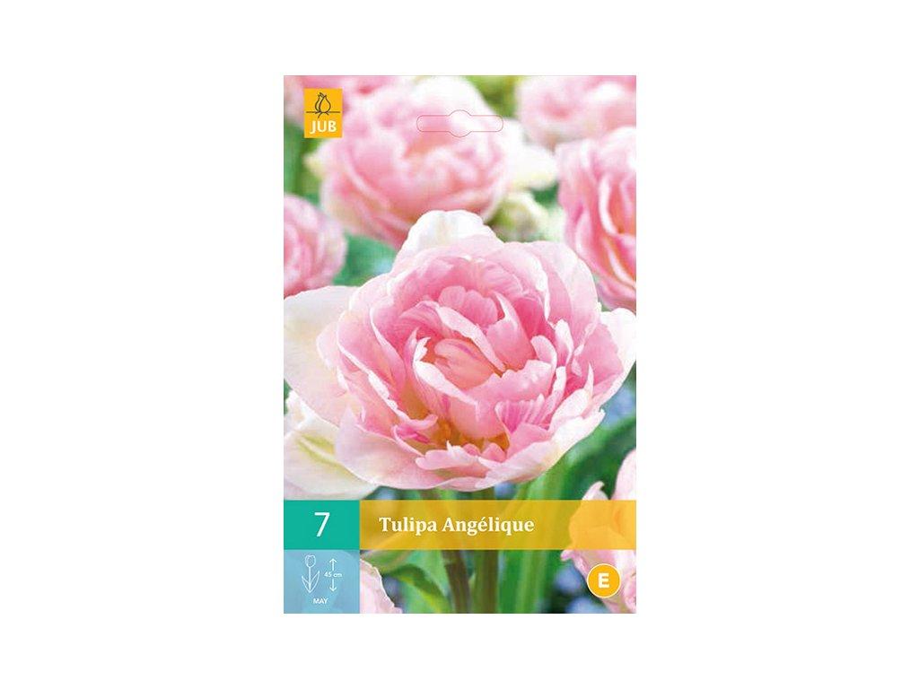 tulipán angélique