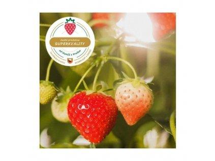 Vraňanské stáleplodící převislé jahody