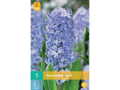 hyacint aqua