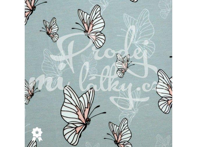 530 motýlci
