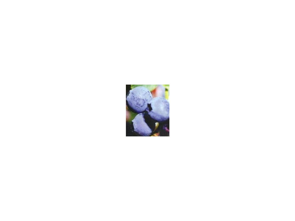 Vaccinium corymbosum Brigitta  Kanadská borůvka Brigitta