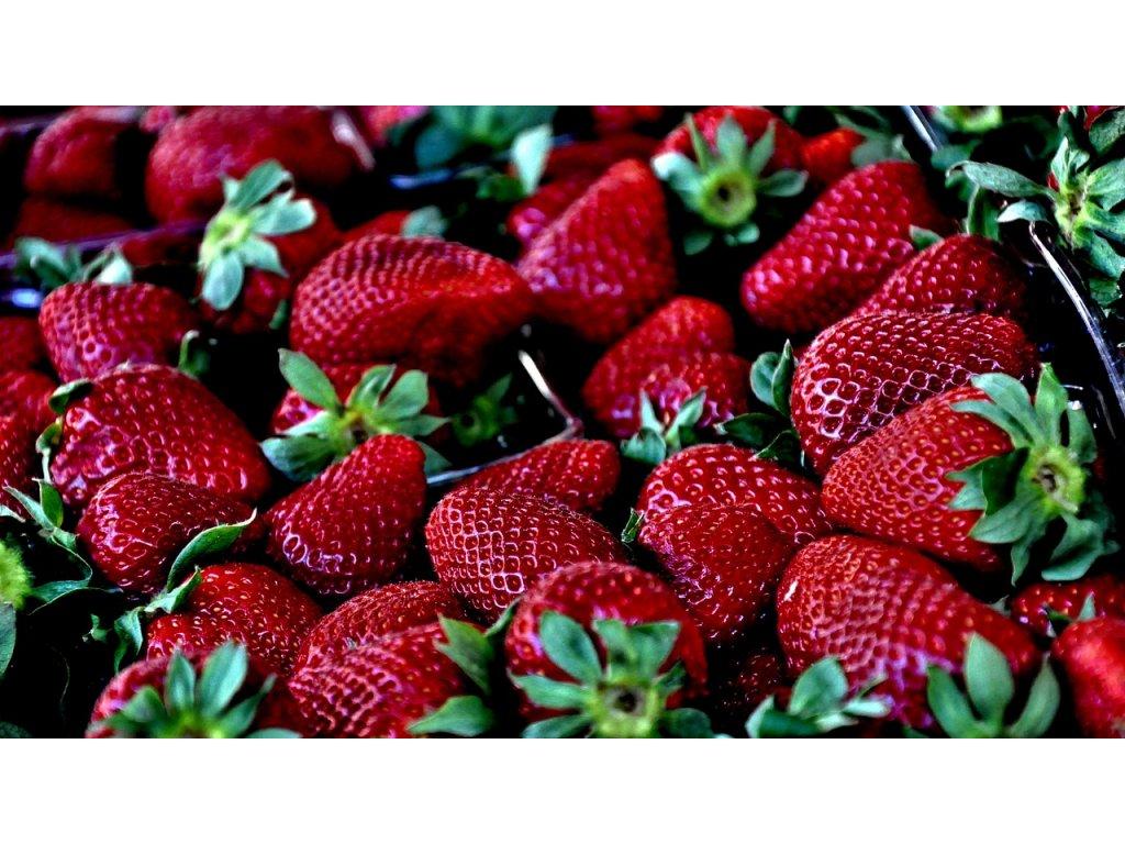 Jahodník Aromas - stáleplodící 10 ks v platu, zakořenělé  Fragaria Aromas stáleplodící (desetipack)
