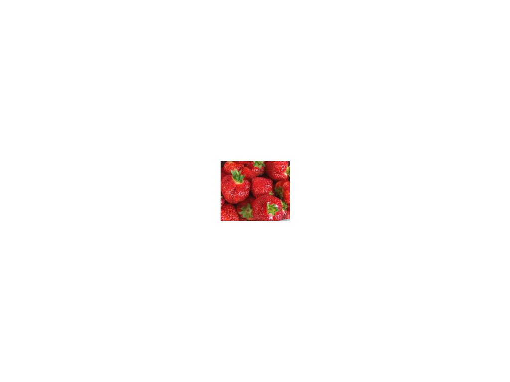 PŘEVISLÝ jahodník Mara de Bois - 10 ks v platu, zakořenělé  Fragaria Mara de Bois - PŘEVISLÝ, STÁLEPLODÍCÍ (desetipack)