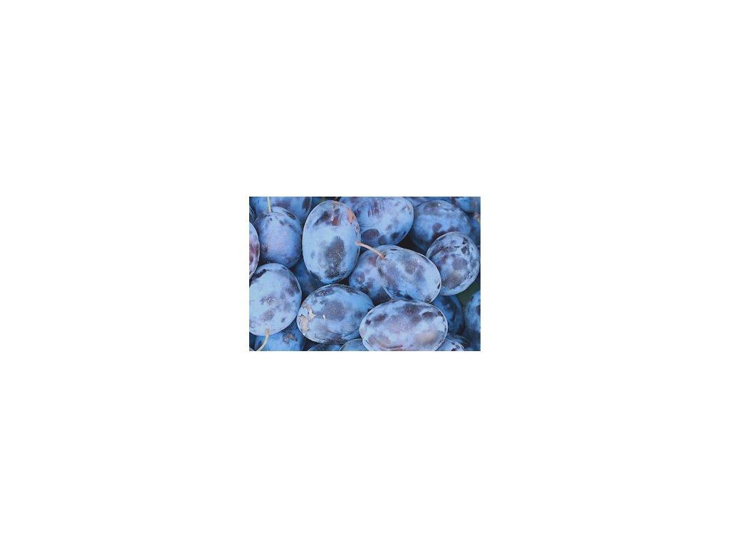 Švestka Amers - špičková odolná odrůda  švestka Amers