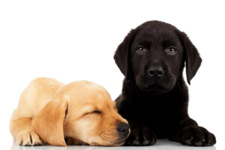 Máme doma štěně. Jak zvládnout jeho výchovu?